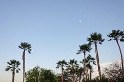 Aire de repos avec des palmiers par la plage dans Aruba Image stock