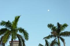 Aire de repos avec des palmiers par la plage dans Aruba Images stock