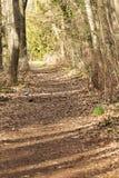 Aire del bosque Foto de archivo