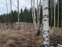 Aire libre del paisaje del otoño en Suecia imagen de archivo libre de regalías