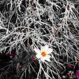 Aire quebradizo de las naturalezas con el chapoteo de la vida que sobrevive Fotografía de archivo libre de regalías