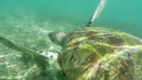 Aire subacuático 4k a cámara lenta de la tortuga almacen de video