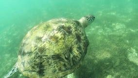 Aire subacuático 4k a cámara lenta de la tortuga almacen de metraje de vídeo