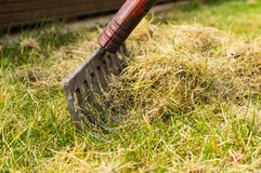 Aireando y limpiando la hierba con un rastrillo en el jardín Imagenes de archivo