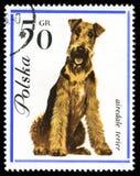 Airedale Terier en una vendimia, sello cancelado del poste Imagen de archivo