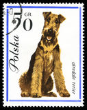 Airedale Terier in a vintage, canceled post stamp Stock Image