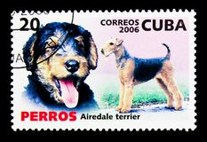 Airedale Terrier (Canis lupus familiaris), Dogs serie, circa 200. MOSCOW, RUSSIA - NOVEMBER 25, 2017: A stamp printed in Cuba shows Airedale Terrier &# royalty free stock photo