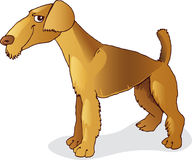 Airedale terrier dog. Illustration of funny dog of airedale terrier breed Stock Images