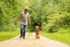 Airedale Terrier El controlador de perro está caminando con su perro obediente en el camino en un bosque imagen de archivo