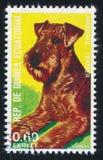 Airedale Terrier fotografía de archivo