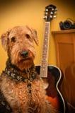 Airedaleterrierhund im Musikstudio mit Gitarre stockfotografie