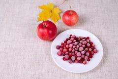 A airela congelada de encontro às maçãs vermelhas Foto de Stock Royalty Free
