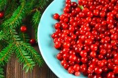 Airela, foxberry, arando, lingonberry em um prato cerâmico azul em uma tabela de madeira marrom Cercado por ramos do abeto Fotos de Stock
