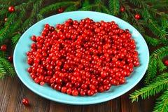 Airela, foxberry, arando, lingonberry em um prato cerâmico azul em uma tabela de madeira marrom Cercado por ramos do abeto Foto de Stock
