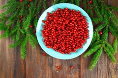 Airela, foxberry, arando, lingonberry em um prato cerâmico azul em uma tabela de madeira marrom Cercado por ramos do abeto Vista  Imagem de Stock Royalty Free