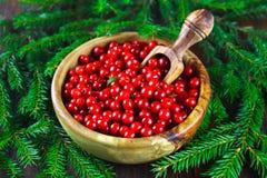 Airela, foxberry, arando, lingonberry em uma bacia de madeira com uma colher em uma tabela de madeira marrom Cercado por ramos do Fotografia de Stock