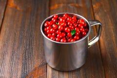 Airela, foxberry, arando, lingonberry em uma caneca de alumínio em uma tabela de madeira marrom Imagens de Stock Royalty Free