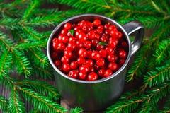 Airela, foxberry, arando, lingonberry em uma caneca de alumínio em uma tabela de madeira marrom Cercado por ramos do abeto Imagem de Stock