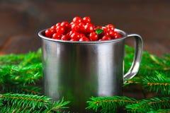 Airela, foxberry, arando, lingonberry em uma caneca de alumínio em uma tabela de madeira marrom Cercado por ramos do abeto Fotografia de Stock
