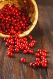 A airela, foxberry, arando, lingonberry sorve da cesta em uma tabela de madeira marrom Imagem de Stock Royalty Free