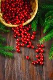 A airela, foxberry, arando, lingonberry sorve da cesta em uma tabela de madeira marrom Cercado por ramos do abeto Fotos de Stock