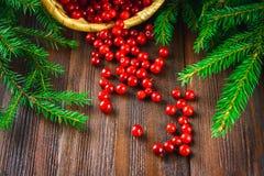 A airela, foxberry, arando, lingonberry sorve da cesta em uma tabela de madeira marrom Cercado por ramos do abeto Fotografia de Stock
