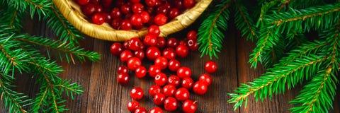 A airela, foxberry, arando, lingonberry sorve da cesta em uma tabela de madeira marrom Cercado por ramos do abeto bandeira Fotografia de Stock Royalty Free