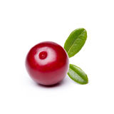 Airela (foxberry, lingonberry) Imagens de Stock Royalty Free