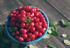 Airela suculenta, uvas-do-monte vermelhas, arandos em uma bacia azul brilhante Fotografia de Stock