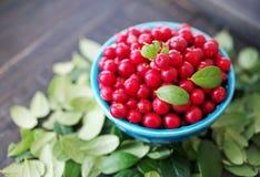 Airela suculenta, uvas-do-monte vermelhas, arandos em uma bacia azul brilhante Foto de Stock Royalty Free