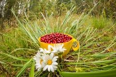 Airela vermelha em uma caneca na grama com as margaridas do campo de flores brancas, configuração lisa Imagem de Stock Royalty Free