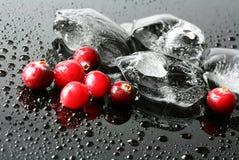 Airelas e gelo Imagem de Stock