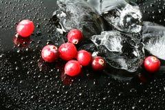 Airelas e gelo Foto de Stock