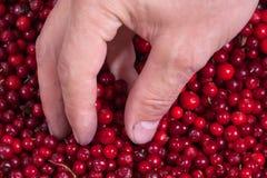Airelas e mão Fotografia de Stock