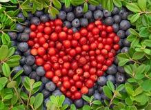 Airelas e uvas-do-monte Imagem de Stock