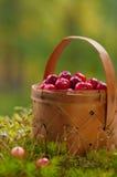 Airelas frescas em uma cesta Imagens de Stock Royalty Free