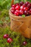 Airelas frescas em uma cesta Fotografia de Stock