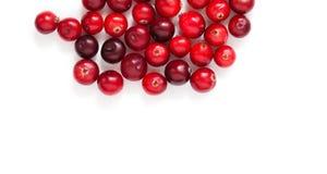 Airelas isoladas no branco Bagas detalhadas maduras vermelhas da floresta do close-up fundo branco cortado Copie o espaço Acima d Foto de Stock Royalty Free
