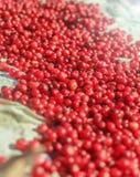 Airelas maduras frescas Foto de Stock