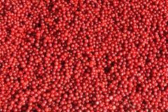 Airelas maduras vermelhas Imagem de Stock Royalty Free