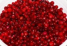 Airelas maduras vermelhas alimento do fundo da vista Foto de Stock