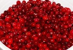 Airelas maduras vermelhas alimento do papel de parede do fundo da vista Imagens de Stock Royalty Free