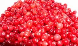 Airelas maduras vermelhas alimento do papel de parede do fundo da vista Foto de Stock