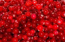 Airelas maduras vermelhas alimento do papel de parede do fundo da vista Fotos de Stock Royalty Free