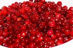 Airelas maduras vermelhas alimento do papel de parede do fundo da vista Fotografia de Stock Royalty Free