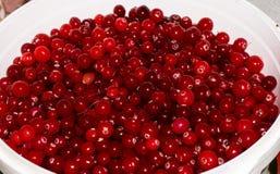 Airelas maduras vermelhas fundo da vista Imagem de Stock Royalty Free
