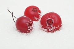 Airelas no açúcar Imagem de Stock