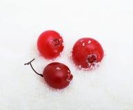 Airelas no açúcar Foto de Stock