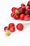 Airelas vermelhas frescas Imagem de Stock Royalty Free