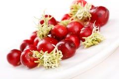 Airelas vermelhas frescas Fotografia de Stock